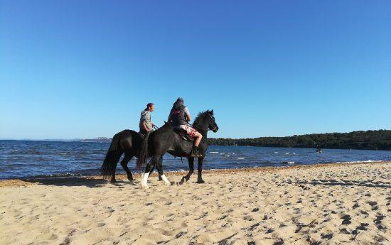 Chevaux sur plage de Giens